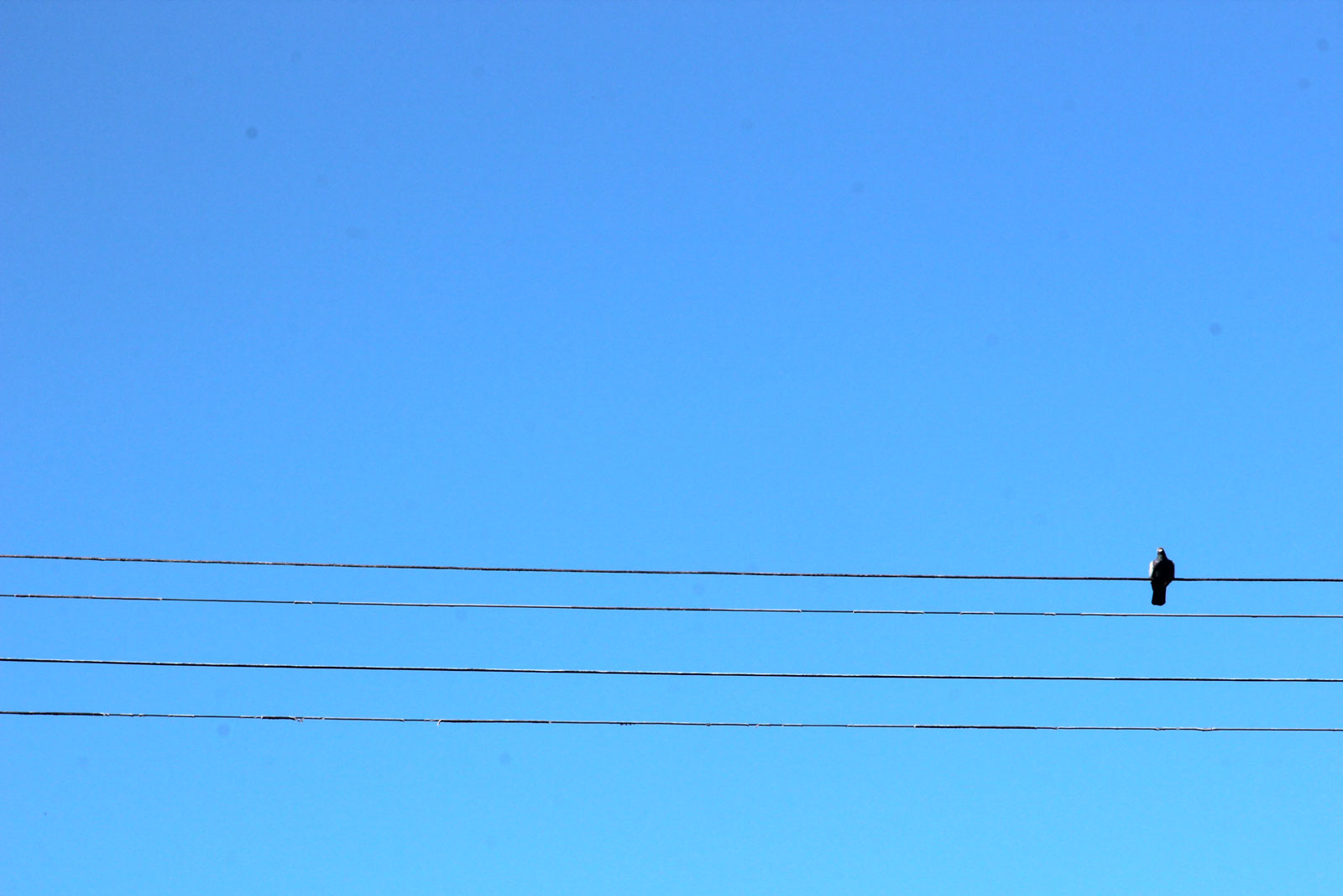 One bird sitting on a telephone wire.