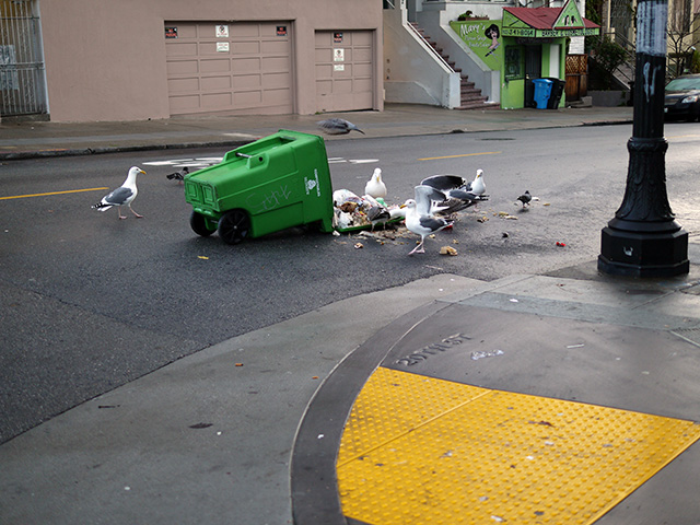 Recology compost bin and seagulls