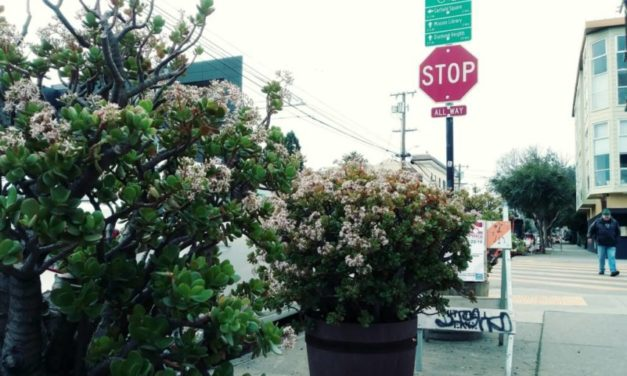 Snap: Winter blooms