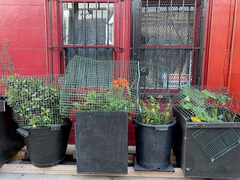 Plants in wire cage on 14th Street, SF Mission District