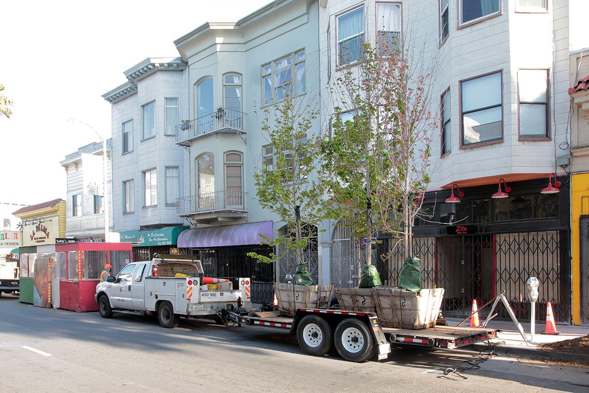 trees on 24th Street