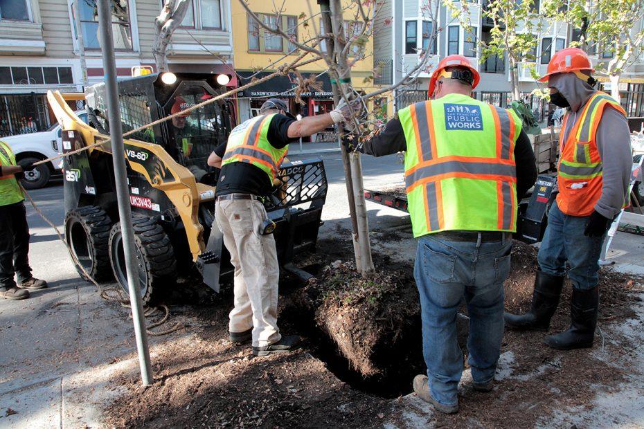 Planting a tree on 24th Street