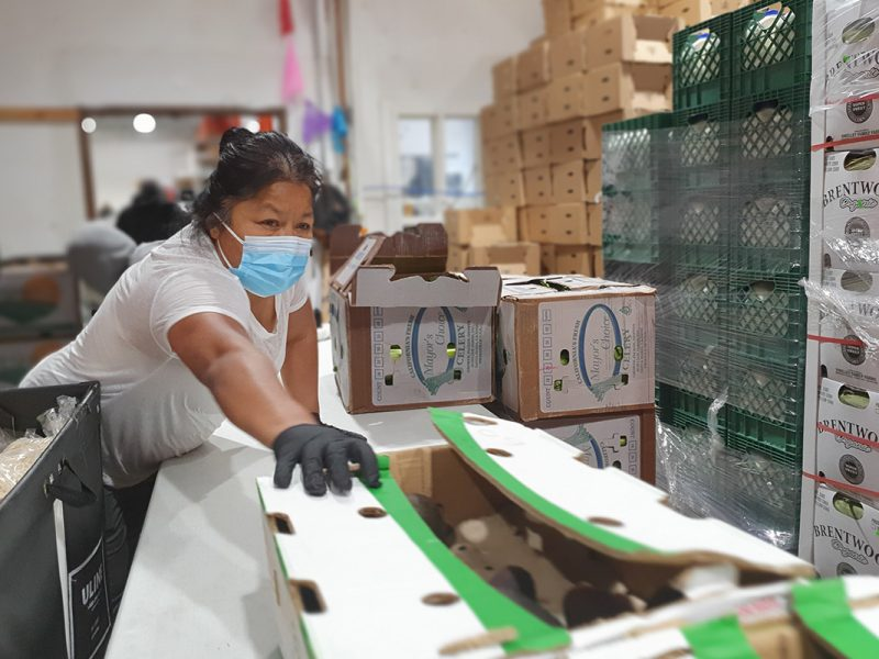 Connie Rivera. Volunteer. Mission Food Hub.